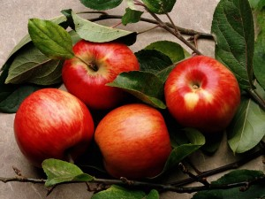 pommes-rouges-au-milieu-des-branches