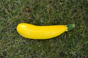 courgettes1
