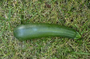 courgettes5