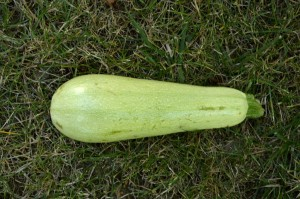 courgettes2