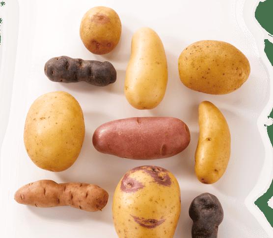 Quelle pomme de terre choisir pour ma cuisine ma cuisine sant - Quand ramasser les pommes de terre ...